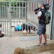 France 4 saison au zoo