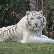 saison au zoo FRANCE 4