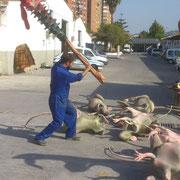 Ratas gigantes III