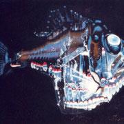 argripinus   200 cm x 200 cm, 2001