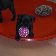 Beverly und ihr Lieblingsspielzeug