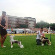 китайская хохлатая собачка Bibiana Vittoria dell Amore Выставка Тирасполь