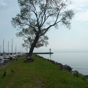 der Schutzdeich für den kleinen Hafen