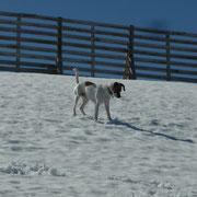 unser Hund freut sich und tobt im Schnee