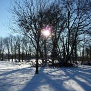 Wintersonne im Poensgenpark
