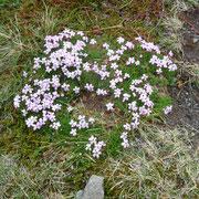 Blumen wachsen hier auch noch