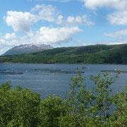 einer der vielen Fjorde