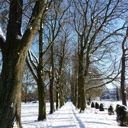 Allee im Poensgenpark