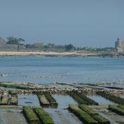 Blick auf die Île de Tatihou mit Austernbänken