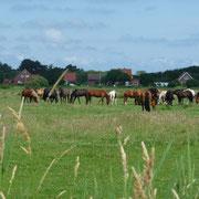 Pferdefreunde kommen auf ihre Kosten