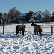 Pferdekoppel am Haus zum Haus