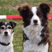 Vajue und Miley unsere Gastobihunde