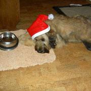 Ashanti wartet auf den Weihnachtsschmaus!