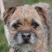 Charakterhund Rusty