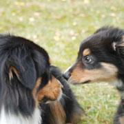 Yukon trifft seinen Halbbruder Chaz