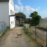 Petit chien devant l'entrée