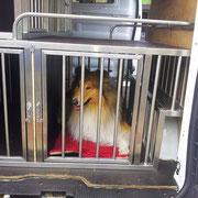 Edelstahl-Transportbox für Hunde