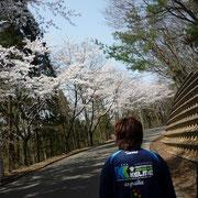 桜を見れば疲れも吹き飛びます…