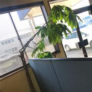 営業所の守り木