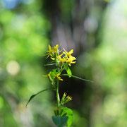 雑草の花。