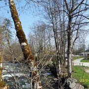 der Königsseer Ache einem sehr schnell fließendem und eiskaltem Fluss