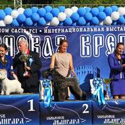 VOLZHSKIY ARKOS CHRIS CAINE -CACIB, BOВ, ЧРКФ, BIG-2.