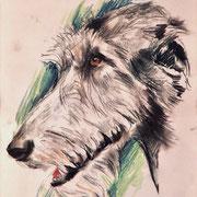 Ирландский волкодав.