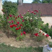 La rose de Montignac (vue de la chambre)