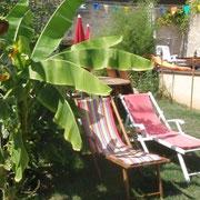 A l'ombre sous les bananiers