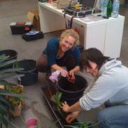 Blumenkästen werden bepflanzt