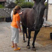 Sonderförderung Therapie Pferd Eltmann