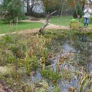 """Ne, hier steht die """"Übeltäterin"""" ;-) - Grossrodung am Teich"""