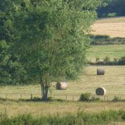 Blick über die Felder vom Garten aus