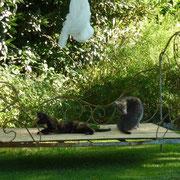 Sanssouci und Grizzly mögen das Eisenbett