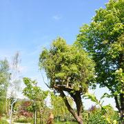 Das Baumhaus braucht dringend eine Coiffeuse