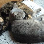 Grizzly & Sanssouci kuscheln immer mal wieder ganz lieb