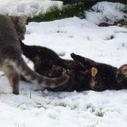 Auch Grizzly und Sanssouci haben ihren Spass am Schnee