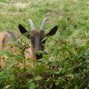 Unsere Nachbarin meckert den lieben langen Tag - kein Wunder so alleine!