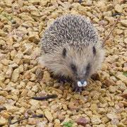 Zwei Tage später - mit verstopfter Nase - jetzt wird's Zeit für die Tierwildstation