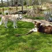 Kaja und Ari toben sich im Garten aus