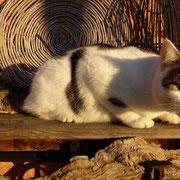 Pierrot nimmt ein Sonnenbad