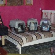 Die drei kleinen Südseeprinzessinnen - frisch aus der Tierpension (siehe Newsletter)
