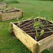 Die ersten drei Gemüse-Hochbeete entstehen