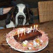 Winston.... Kuchen auf Schnauzenhöhe