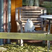 Oulima, die eine Katze von Beate