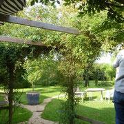 Die Rosenranken an der Terrasse kommt weg