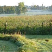Nebel kriecht aus dem Tal