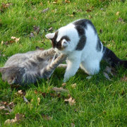 Grizzly und Pierrot im spielerischen Zweikampf