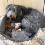 Platz ist in dem kleinsten Nest.Bart kuschelt sich gerne in Hopis Nest