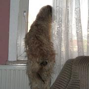 Kira schaut am Liebsten aus dem Fenster